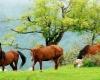 Armenia: Land of the Horses